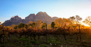 Vineyard at sunrise with mountain in background